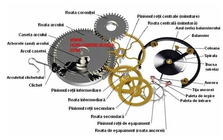 x03-terminologia rotilor